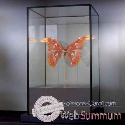 Attacus atlas Objet de Curiosite -IN018