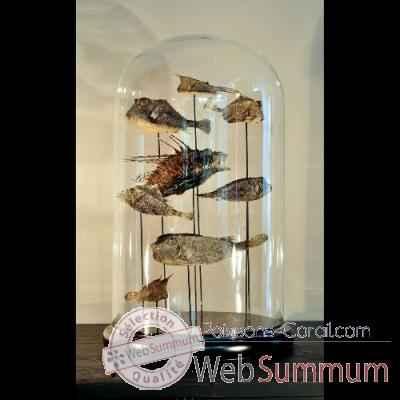 corail magnifi objet de curiosit dans coquillage et corail sur poissons corail. Black Bedroom Furniture Sets. Home Design Ideas