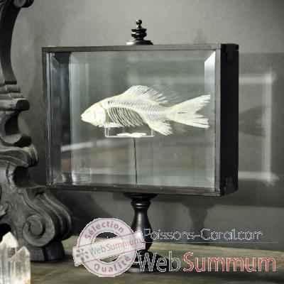 rostre d 39 espadon objet de curiosit dans cr nes et machoires sur poissons corail. Black Bedroom Furniture Sets. Home Design Ideas