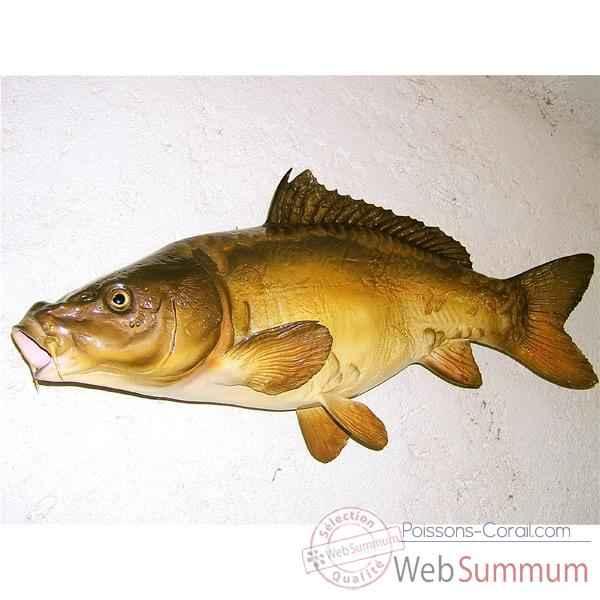 Troph e poisson d 39 eau douce cap vert carpe miroir trdf07 for Poisson tropicaux eau douce
