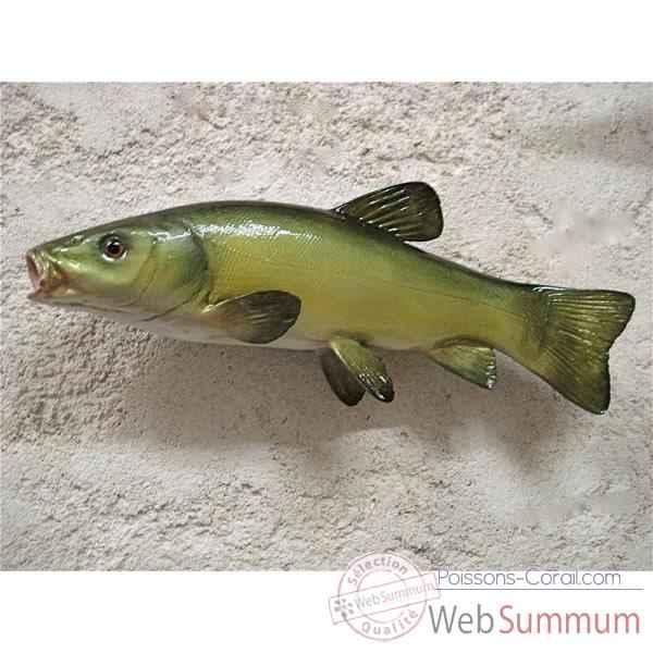 Troph e poisson d 39 eau douce cap vert tanche trdf10 for Poisson tropicaux eau douce