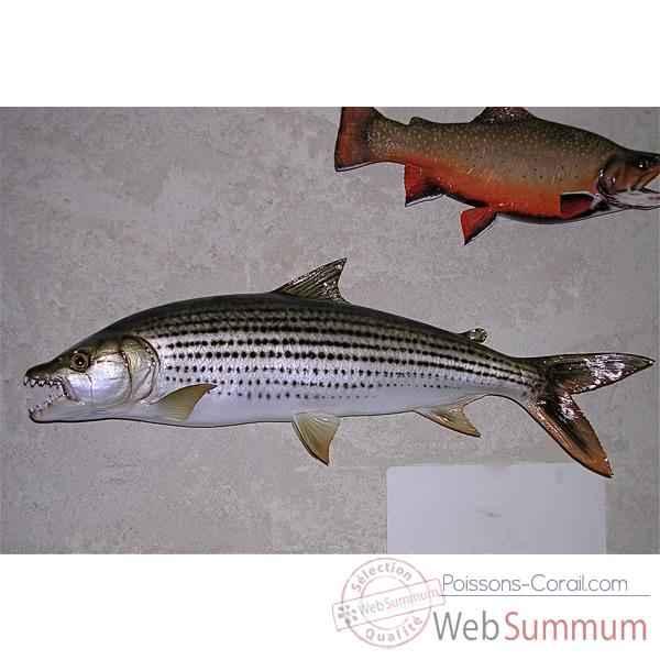 Troph e poisson d 39 eau douce tropicale cap vert poisson for Poisson tropicaux eau douce