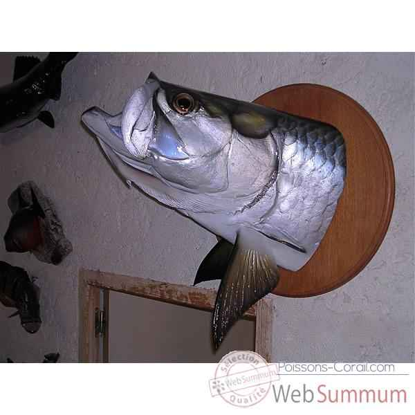 Video Trophee poisson d'eau douce tropicale Cap Vert Tarpon tete -TR019