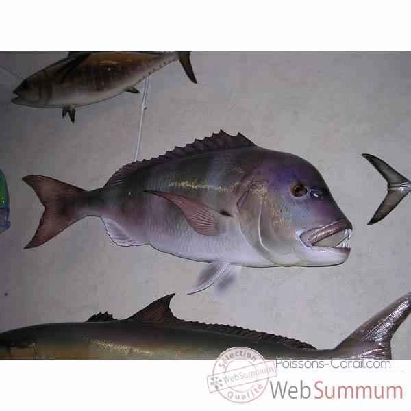 Achat de dent sur poissons corail for Achat poisson