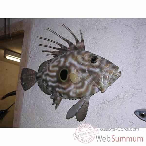 Troph e poisson des mers atlantique m diterran e et nord - Grand poisson de mer ...