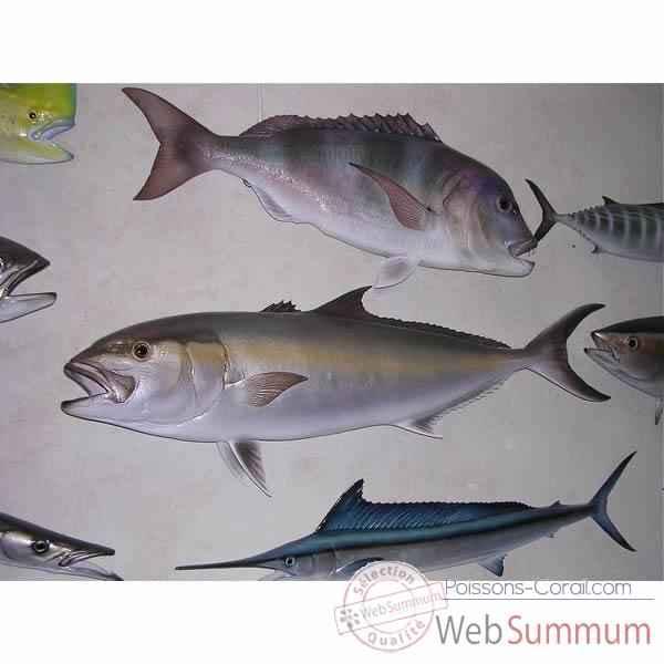 Achat de mediterranee sur poissons corail for Achat poisson