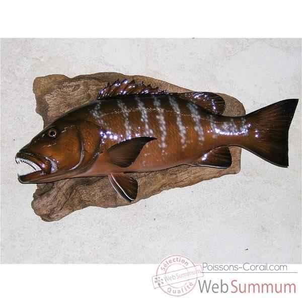 Troph e poisson des mers tropicales cap vert carpe rouge for Poisson carpe
